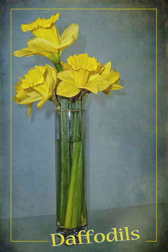 Daffodils for Spring
