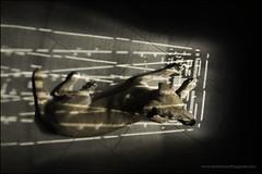 6-12 agnes - quite angular (Dave (www.thePhotonWhisperer.com)) Tags: light puppy window shadow door mutt mixedbreed