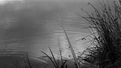 20170702_161840(0) (MR_Bundy) Tags: nokia 808 pureview bw lake trees