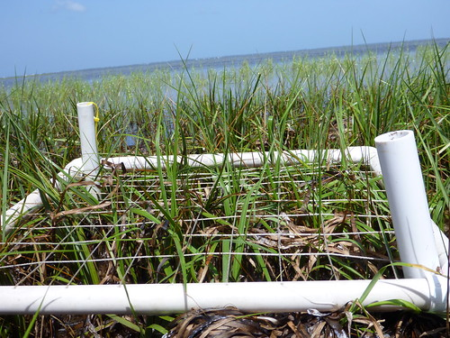 Determining the density of seagrass at