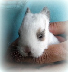 Not just a mother can love this face (makeupanid) Tags: friends baby rabbit bunny face eyes stripe ears cutie day11 ithink