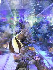Aquarium (micamica) Tags: blue summer fish water coral aquarium nikon purple coolpix s3000
