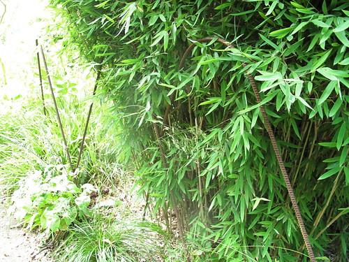rebar plant fence