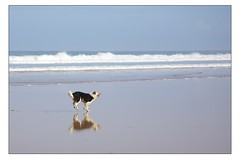 Dogs at Watergate Bay 5 (Mark-Crossfield) Tags: pictures uk greatbritain sea england dog pet pets beach dogs walking coast photo sand watergatebay cornwall waves image photos sandy picture wave images beaches watergate walkies sandybeach bigwave doglovers photosof picturesof nearnewquay dogsonbeaches imagesof watergatebayhotel markcrossfield