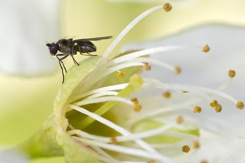Fly in Spring