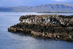 IMG_0098 (nanna lind) Tags: iceland sland vestfirir vesfirir breiafjrur