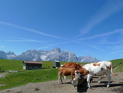 Dolomiten (Achim Thomae) Tags: italien italy kuh cow berge alpen dolomites kühe südtirol dolomiten sexten sextenerdolomiten kalkalpen kuhtränke thomae achimthomae weltnaturerbe unescoweltnaturerbe