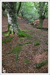 Natura (borjagomez) Tags: parque canon eos natural sierra bilbao bosque bizkaia durango euskadi haya montes panormica urkiola hayedo 1755mm abedul anboto 50d amboto duranguesado durangalde