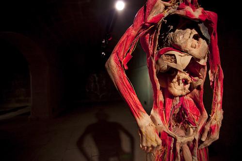 corpo humano como nunca o viu