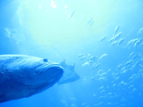 Georgia Aquarium 11