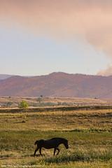 Wildfire Horses
