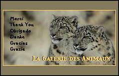Calque Merci-LGDA-3