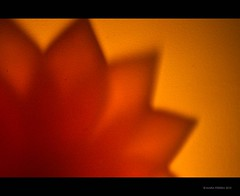 Lotus Flower Shadow {Explored} (RiaPereira - here but mostly there) Tags: shadow macro canon candle lotus 100mm theme candlelight concept lotusflower macromonday canond7 riapereira