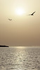 Seagulls (Fab85) Tags: tramonto mare sole gabbiani sicilia trapani riflesso