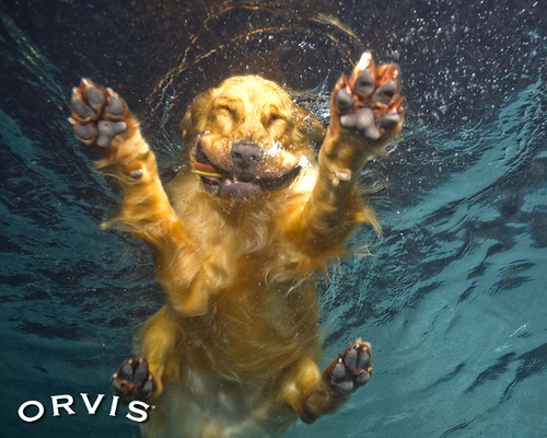 Orvis Cover Dog Contest - Chase