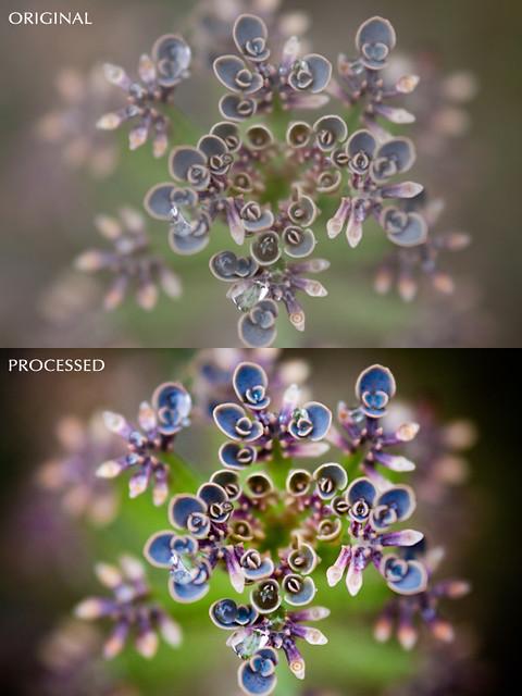 ProcessedCTST.jpg