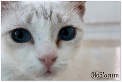 (۰•● Дl-Sulaiбi.Qбя ●•۰) Tags: cats cute eye cat kitten puss عين عيون قط قطوه قطو