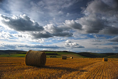 Fields of bales and sky, Scottish Borders (Snipps Whispers) Tags: sky harvest fields bales