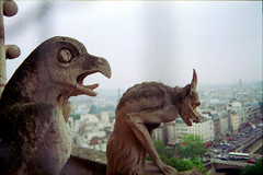 Bird and Horned Goat Like Gargoyles 04 (Brechtbug) Tags: wild sculpture paris france bird church water rain monster statue stone scary october cathedral bell religion towers over like goat medieval 1993 gargoyle terror monsters gutter gargoyles spout photographed notre dame creatures creature leaning gremlins between parapet horned guardians oct1993
