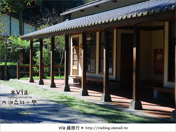 【溪頭一日遊】森林中的夢幻校園~內湖森林小學10
