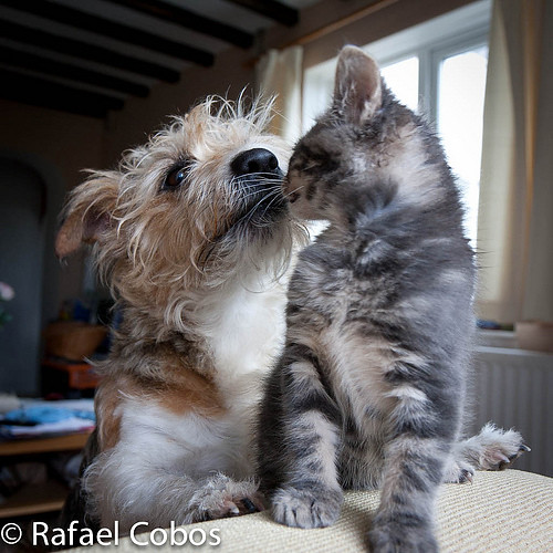 cute dog and rescued gray kitten