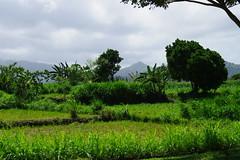 Landscape Bali/Indonesia (JM Photography) Tags: bali nature indonesia landscape natur grn landschaft indonesien grenn 2010