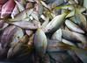 Ojos (carlosmaco) Tags: fish venezuela domingo pulpo mariscos mero carite laguaira cazon litoralcentral mosquero picua estadovargas mercadopescado