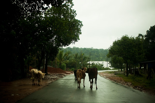 Monsoon, Karnataka - Chitra Aiyer Photography