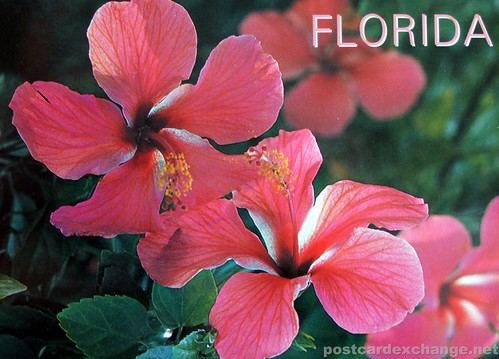 Florida – the Land of Flowers