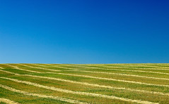Striped Field of Hay Windrows in a Field (Todd Klassy) Tags: blue abstract green nature field grass lines horizontal landscape daylight scenery montana pattern mt flat natural cut farm harlem stripes farming harvest bluesky nobody minimal american crop simplicity land feed dried hay copyspace timothy agriculture minimalism hayfield simple livestock silage strips agricultural clearsky drying stubble fodder haymaking alfalfa elegance grassy inarow farmfield ryegrass mowed harvested rangeland openspaces windrows agribusiness hayrake colorimage brome agritourism montanascenery organicfarming rurallandscape westernunitedstates makinghay cuthay grasssilage harlemmontana farminginmontana montanafarm ruralmontanalandscape rowsofhay