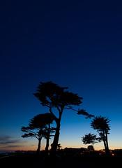 I love you California (Jinna van Ringen) Tags: california longexposure trees santacruz night canon stars photography eos coast ringen elusive van jorinde jinna elusivephoto elusivephotography 5dmarkii 5dmkii jorindevanringen jinnavanringen chanderjagernath jagernath jagernathhaarlem