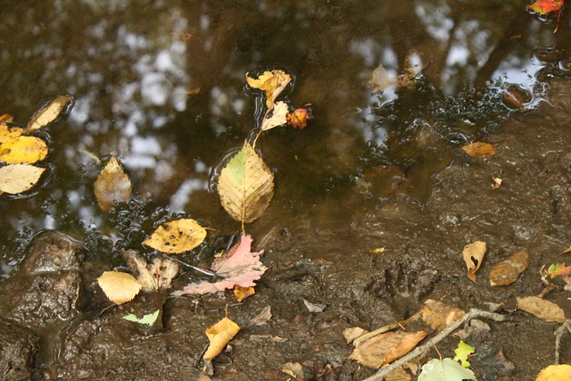 leaves, reflections