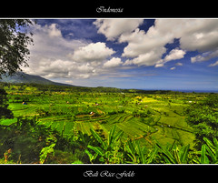 Bali Rice Fields (msdstefan) Tags: pictures ocean trip travel vacation sky bali panorama sun holiday sol beach strand indonesia landscape island coast soleil asia asien southeastasia rice pics urlaub terraces himmel best insel tirta landschaft sonne rtw isla spiaggia hdr indonesien nicest kste ozean gangga reisterassen landschaftsbild colorphotoaward superaplus aplusphoto nikond90 flickraward platinumheartaward flickrestrellas 100commentgroup oltusfotos however~itsstillmylife mygearandmepremium mygearandmebronze mygearandmesilver mygearandmegold mygearandmeplatinum mygearandmediamond
