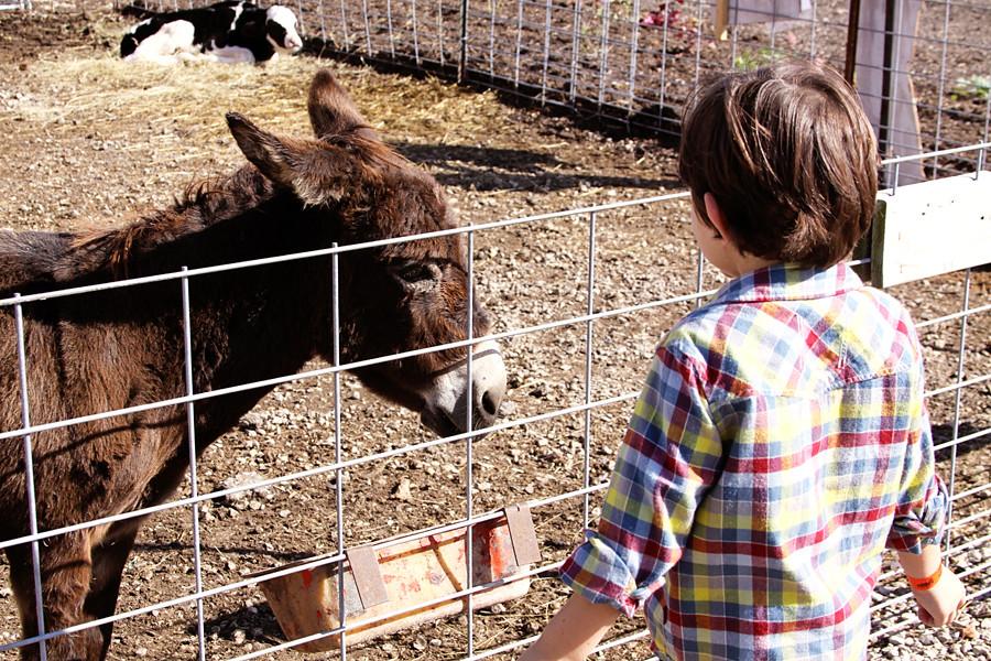 Rader farm 2010 (48))blog