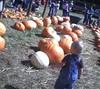 pumpkin 110