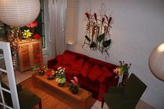 flowers 1 052