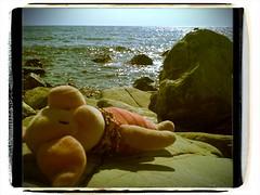 Am Strand bei Quercianella - Ferkel sonnt sich