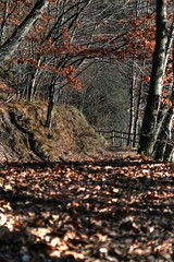 Autumn is coming (Umberto Fistarol) Tags: autumn italy tree leaves foglie eos genoa genova autunno bosco brugneto 400d fistarol