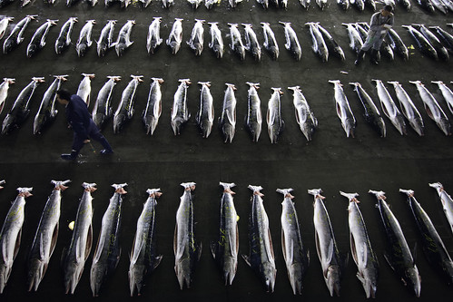 The Kesennuma Fish Market