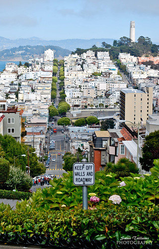 A view from the top of Lombard Street