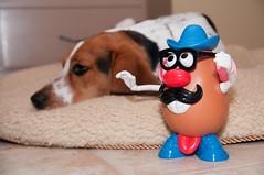Leave the poor boy alone! (Paguma / Darren) Tags: dog bed sleep hound mrpotatohead floyd tater tapper tamronspaf1750mmf28xrdiiildasphericalif
