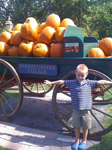 Peanut being a scarecrow at Yankee Candle