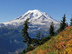 Rainier coming down Shriner Peak trail.x
