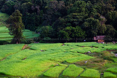 Terraced rice-fields and local life: Chom Tong, Chiangmai, Thailand (Nobythai) Tags: flowers sunset sea sky people mountain elephant nature night forest sunrise river sushi landscape geotagged thailand eos japanese foods rainbow asia southeastasia fireworks dusk bangkok contest east vietnam international thai soba 5d chiangmai dishes hdr aasia pattaya 2010 chiangrai maehongson ayutthaya bangpain greatphotographer supershot chomtong  mywinners anawesomeshot streetthailand flickrawards flickraward unseenasia earthasia totallythailand flickrtiltshift impensable steetthailand viewphotosfromyouorfromeveryone viewphotosfromyouorfromeveryonechonburi viewphotosfromyouorfromeveryonestreet