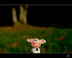 La vache qui rit (soiveq) Tags: las forest canon toy eos cow foret jouet vache 500d slawek krowa nowakowski zabawka soiveq