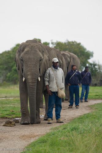 RYALE_Elephant_Sanctuary_3