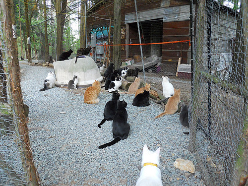cute rescued cats at goathouse refuge
