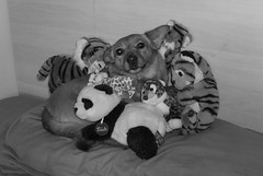 Daga&company (Beps981) Tags: dog cane banda happy panda sweet tiger trudi tigre dolcezza peluches daga