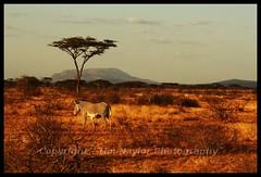 Samburu Landscape (Tim N@ylor) Tags: africa lake elephant monkey tim buffalo honeymoon kenya flamingo lion lodge safari springs mara lions warrior cheetah serena cubs hippo elephants animalplanet masai bigcats naylor rino lodges masaimara masaiwarrior samburo worthog buffalosprings worthogs somak nakaru timnaylor