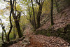 Autunno/Autumn (Angelo Raia) Tags: autumn trees plants verde green nature foglie alberi landscape nikon natura angelo autunno paesaggio marrone raia anawesomeshot d3000